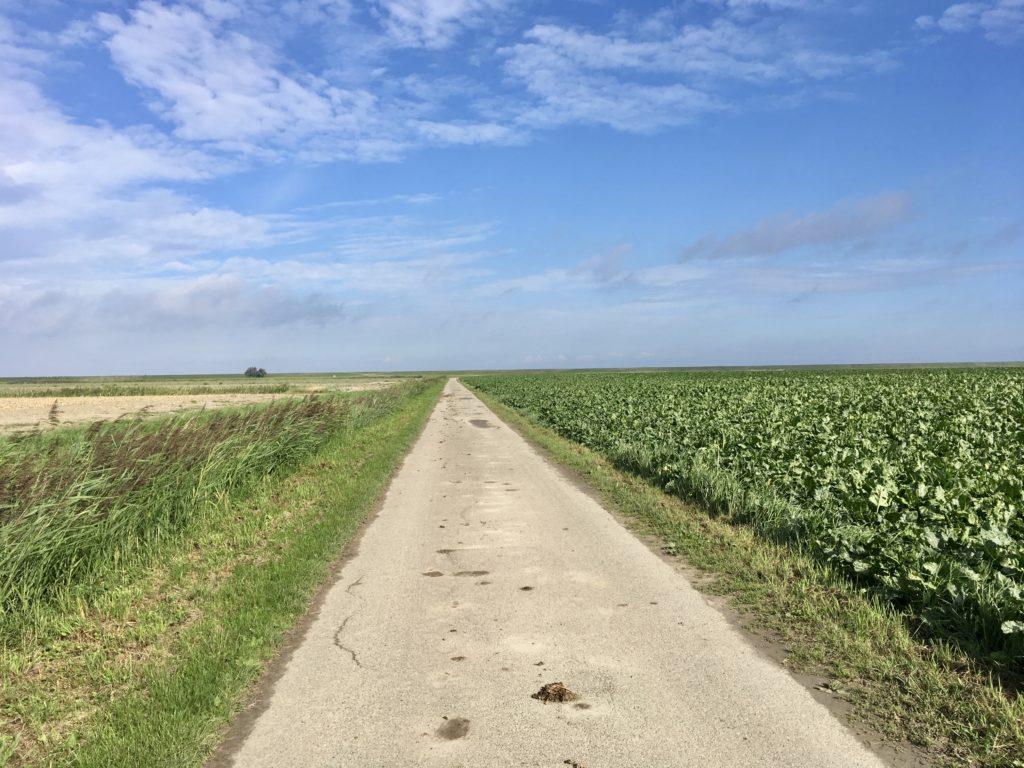 groningen het hogeland wadlopen lopen fietsen